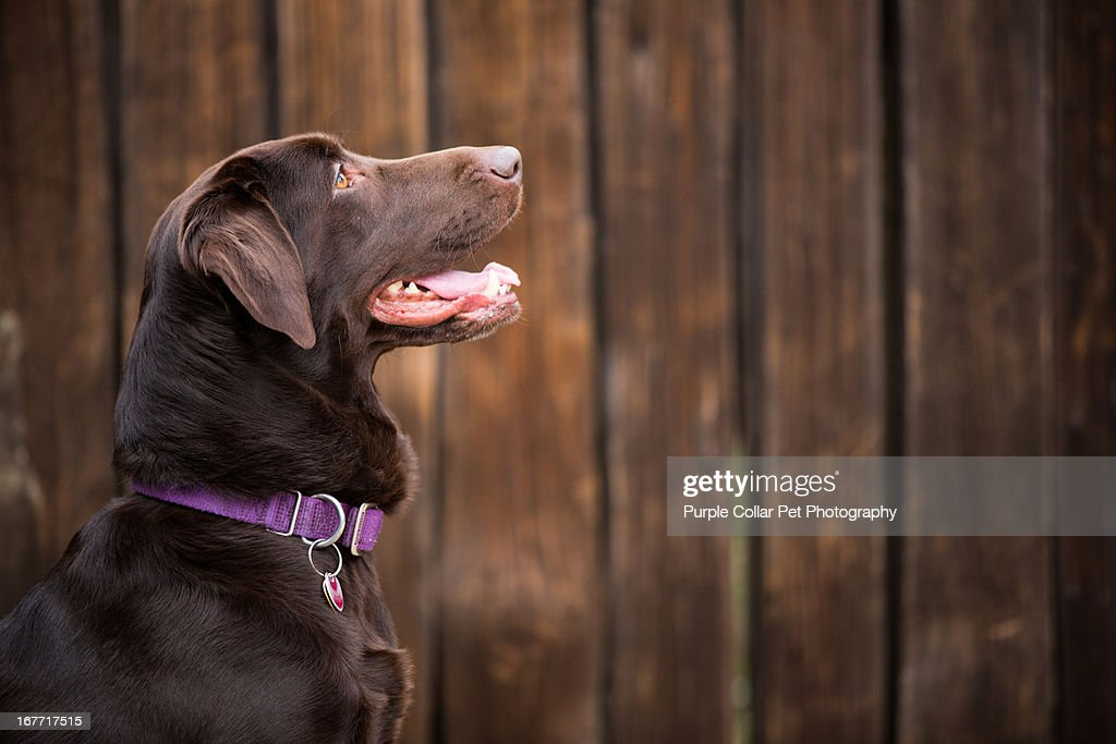 Profile View of Smiling Dog