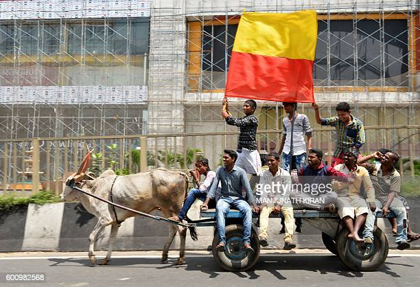 ProKarnataka activists wave the Karnataka flag as they ride on an oxdrawn cart during a statewide strike in Bangalore on September 9 2016 Agitation...