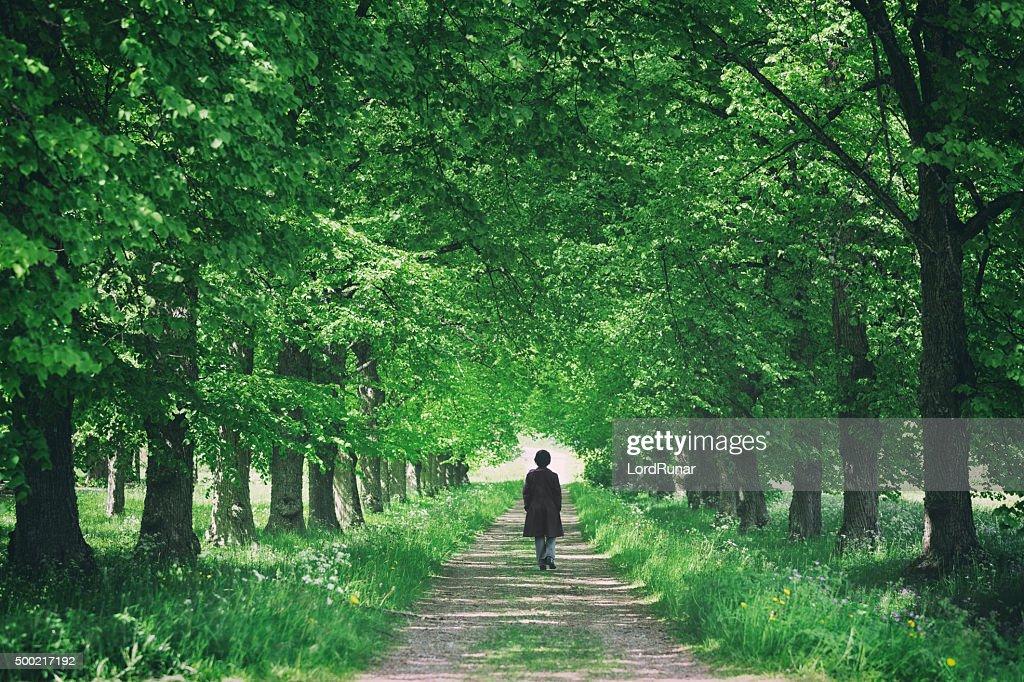 Promenade through trees : Stock Photo