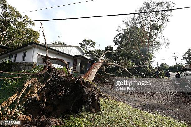 Property in North Avoca inspected after tree damage from the storm on April 24 2015 in Gosford Australia Gosford City and Wyong shire have official...