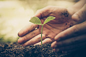 hand of a farmer nurturing a young green plant with natural green background / Protect and love nature concept