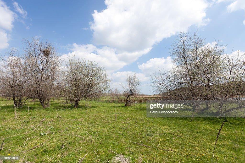 Protected Area Yatata Near The Town Of Beloslav, Bulgaria