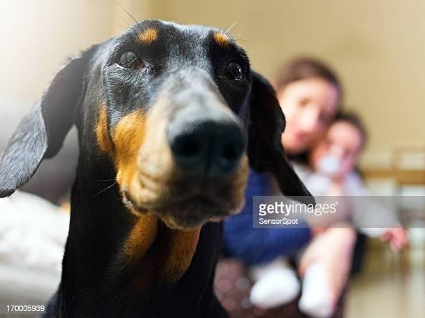 Protective guard dog