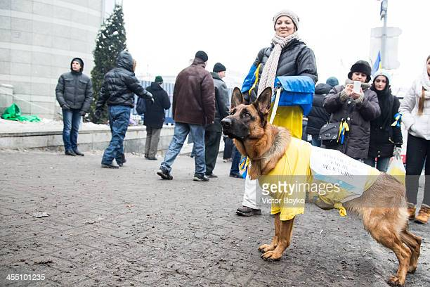 A protester and dog watch people entering the Maidan Square after authorities launched an early morning intervention to partially clear Maidan Square...