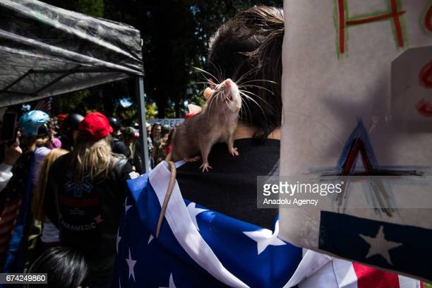 A protester with a pet rat listens to speeches during a proDonald Trump rally at Martin Luther King Jr Civic Center Park in Berkeley California on...