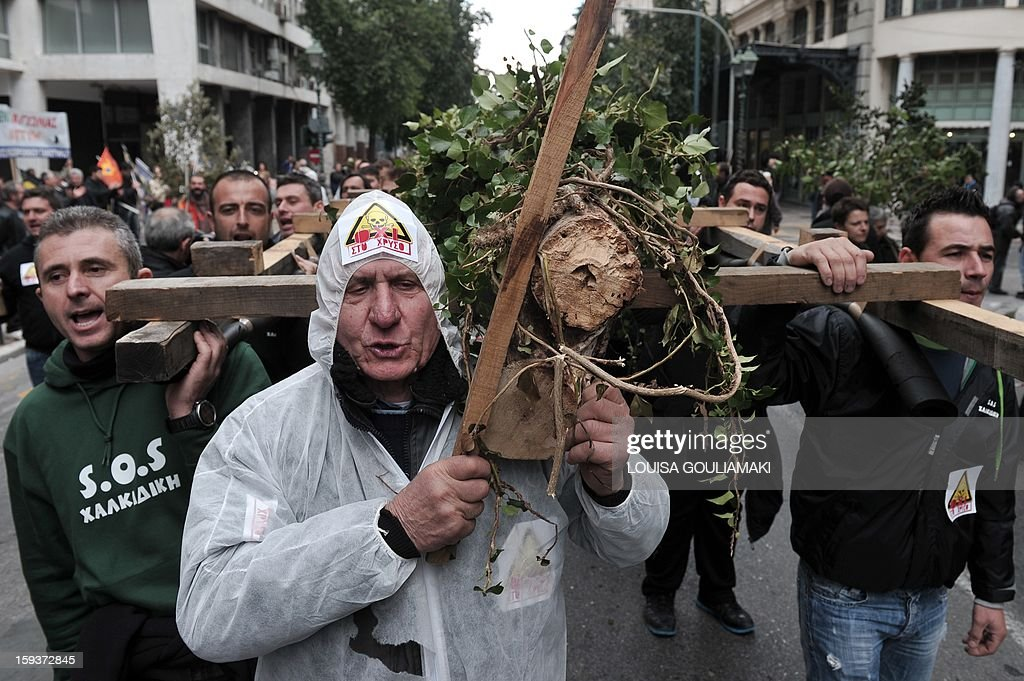 Protesters carry on January 12, 2013 felled oak and beech trunks on biers in the center of Athens during a demonstration against a Canadian gold mining investment in the northern region of Halkidiki that is feared to be causing irreversible damage to the local environment. A number of citizens' groups, backed by the radical leftist party Syriza that is now the second largest group in parliament, have been trying to scupper the project since 2011, when the government allowed Hellenic Gold -- a subsidiary of Canadian firm Eldorado Gold -- to dig in the area.