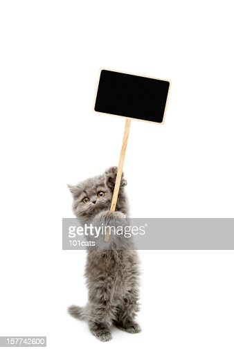 Protesters cat