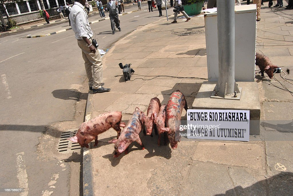 Protesters dip pigs in blood during a protest on May 14, 2013 in Nairobi, Kenya. The protesters released a pig and about a dozen piglets outside parliament to show their anger at newly elected MPs demanding higher salaries. The protest was intended to portray the MPs as greedy..