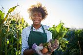 proud african american gardener posing for portrait with freshly harvested golden beets