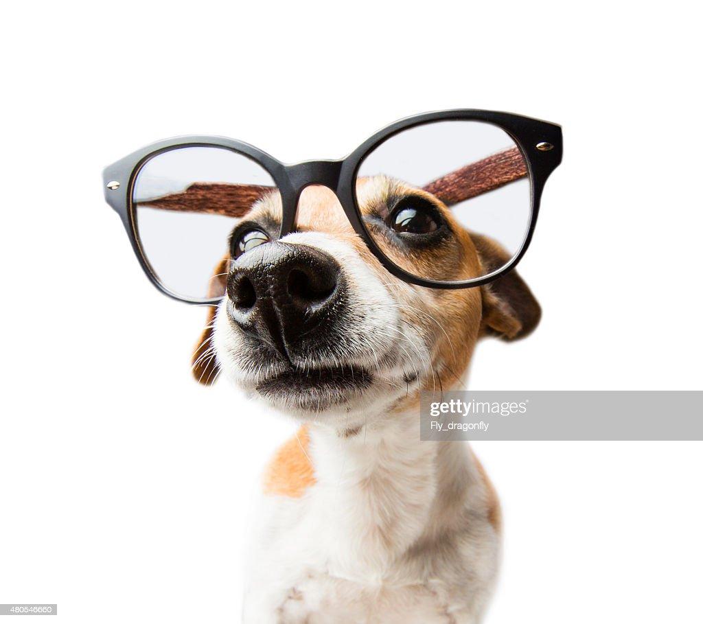 Orgulhoso Cão : Foto de stock