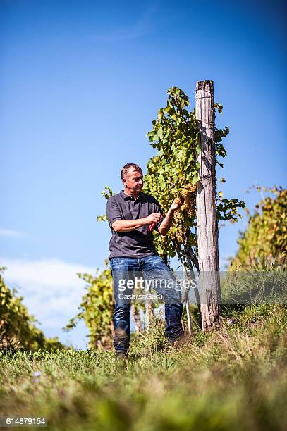 Proud Farmer portrait in his Vineyard