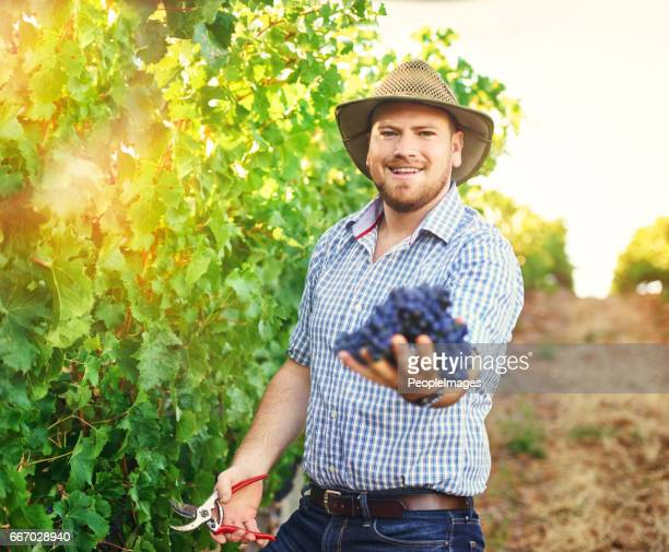 I provide fruit for eating, juicing and winemaking