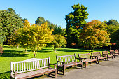 Public Roath Park with a row of benches and beautiful trees during a sunny morning at the beginning of autumn.