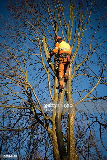 Public tree cutter.