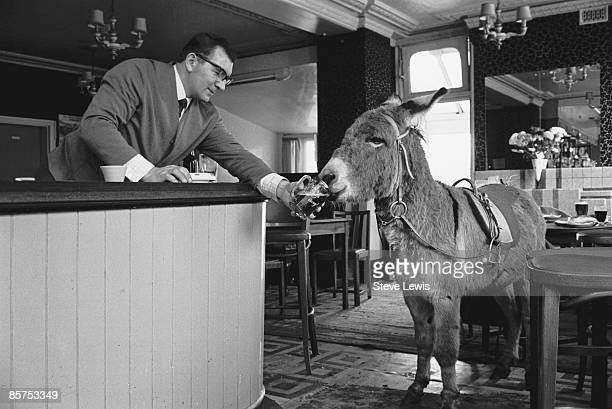 A publican serves a glass of stout to a donkey in the East End of London 1960s