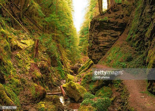 Pucks Glen, Cowal Peninsula, Argyll and Bute