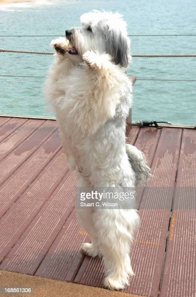 Pudsey attends Pudsey The Movie Photocall during the 66th Annual Cannes Film Festival at the Palais des Festivals on May 16 2013 in Cannes France
