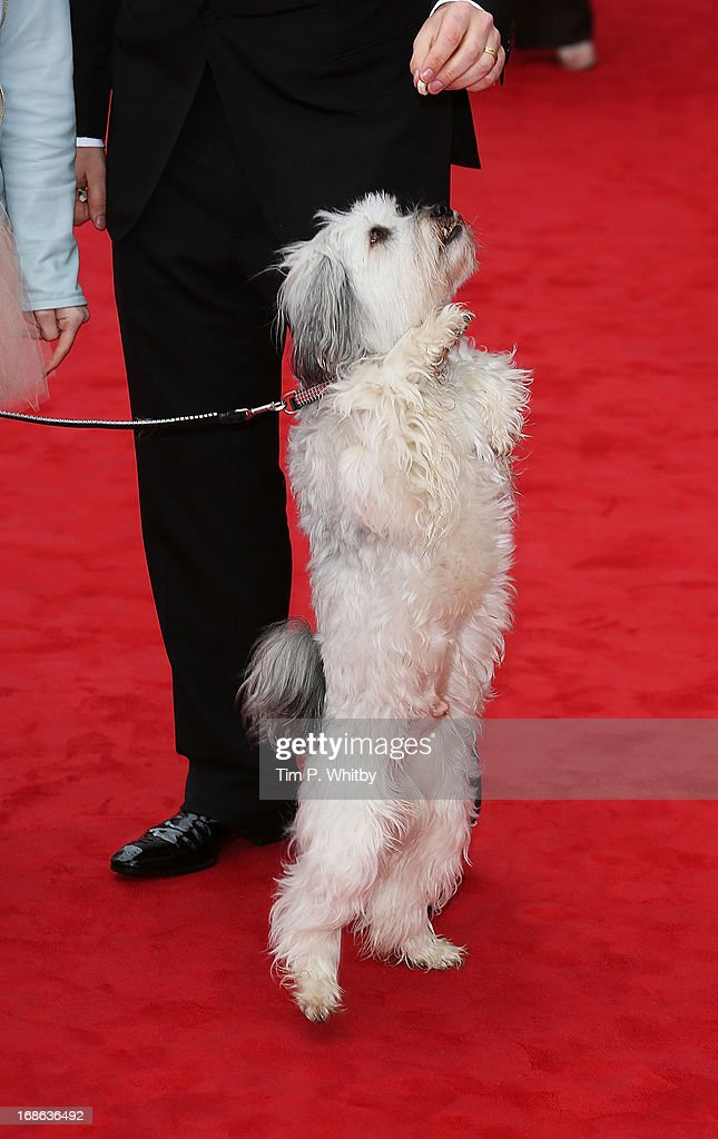 Pudsey the dog attends the Arqiva British Academy Television Awards 2013 at the Royal Festival Hall on May 12, 2013 in London, England.