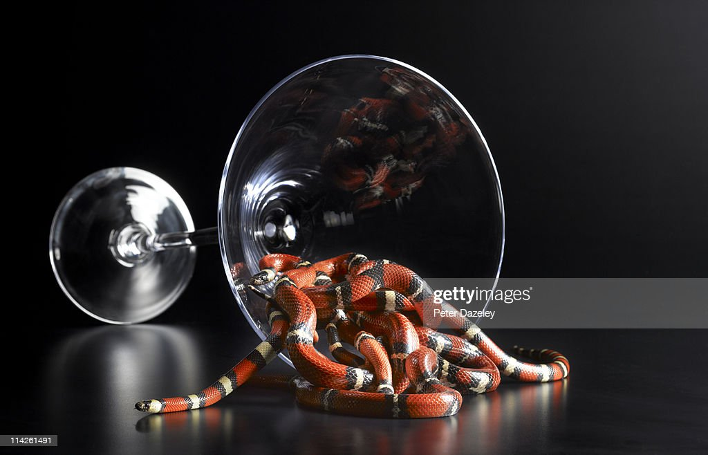 Pueblan milk snakes coming out of glass : Stock Photo
