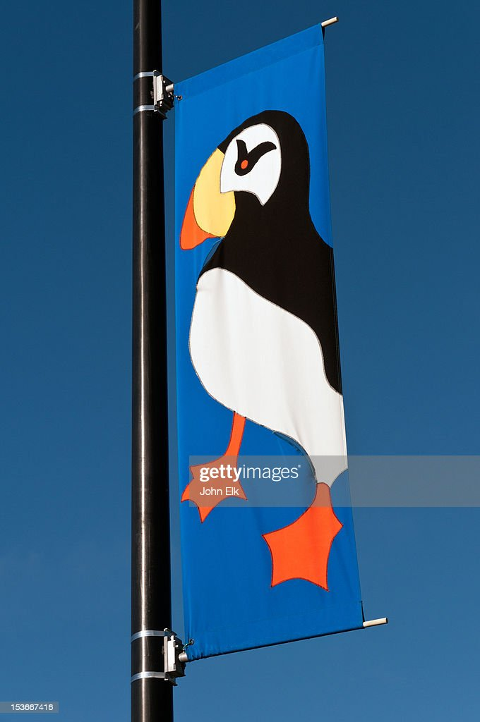 Puffin banner : Stock Photo