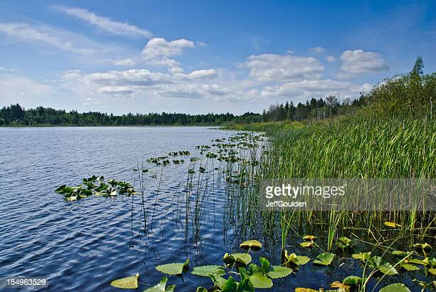 Blue Sky, Puffy Clouds Over a Lake