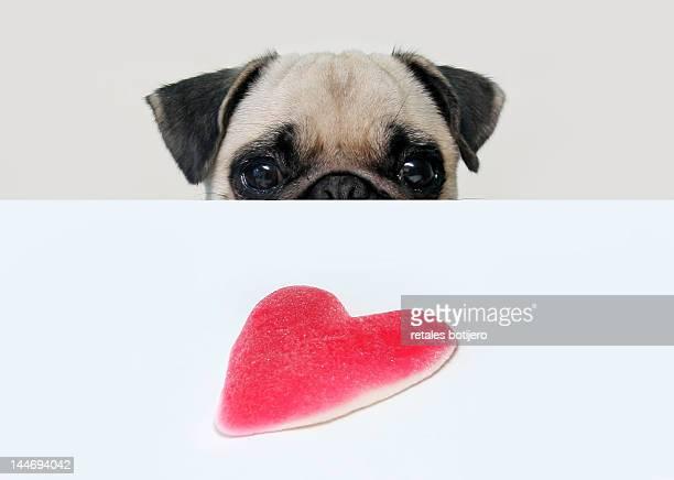 Pug and heart