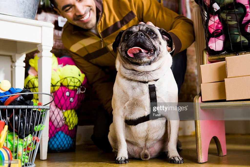 Pug in Pet Shop