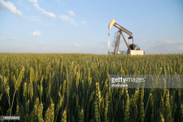 Pumpjack in a Field
