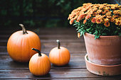 Canada, halloween, decoration, orange, flowers, holiday event