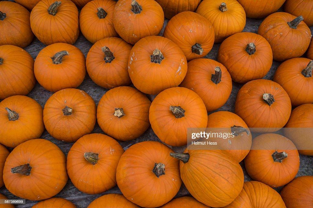 Pumpkin Festival in Erfurt