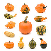 """Pumpkin, gourd and squash collection on a white background.  Composite image.  YOU MIGHT ALSO LIKE:"""