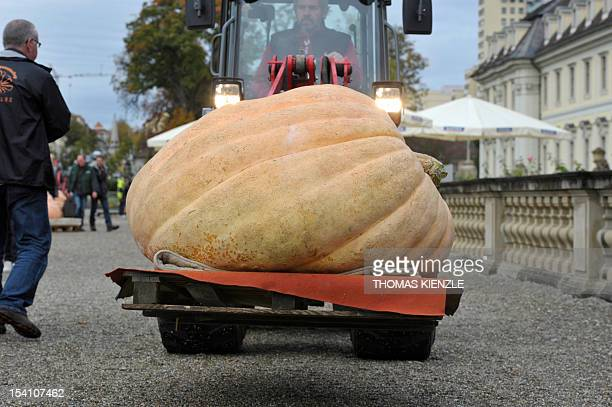 A pumpkin is delivered to the European Pumpkin Championship for the heaviest pumpkin look at the exhibited giant pumpkins at the Baroque Castle in...