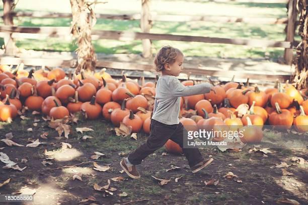 Pumpkin Run - Toddler Boy