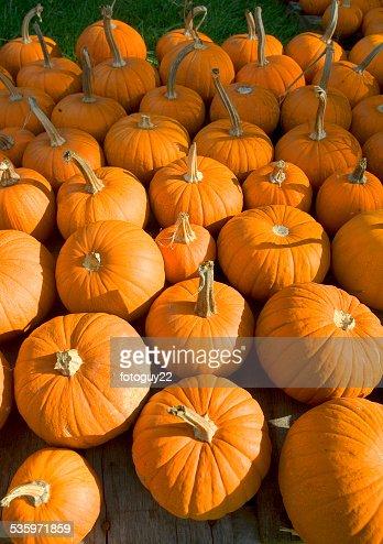 Pumpkins 2 : Stock Photo