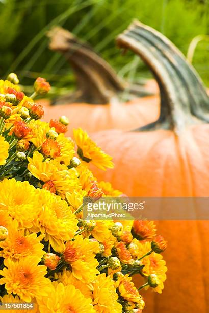 Pumpkins and mums for sale at the local market (I)