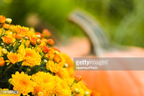 Pumpkins and mums - IV