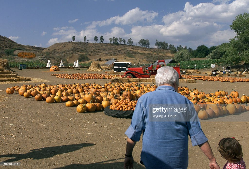 Pumpkins are put out at Lombardi Ranch in Saugus in preparation for Halloween DIGITAL IMAGE SHOT ON THURSDAY 10/5/2000