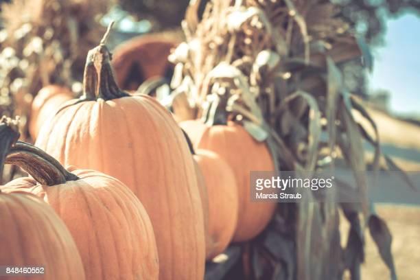 Pumpkins at the Pumpkin Stand