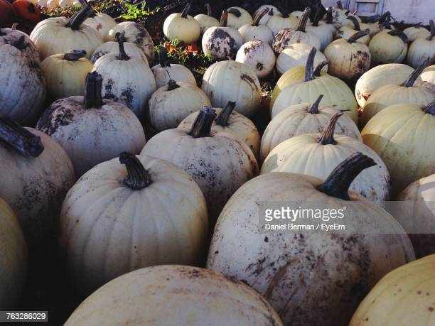 Pumpkins For Sale At Market