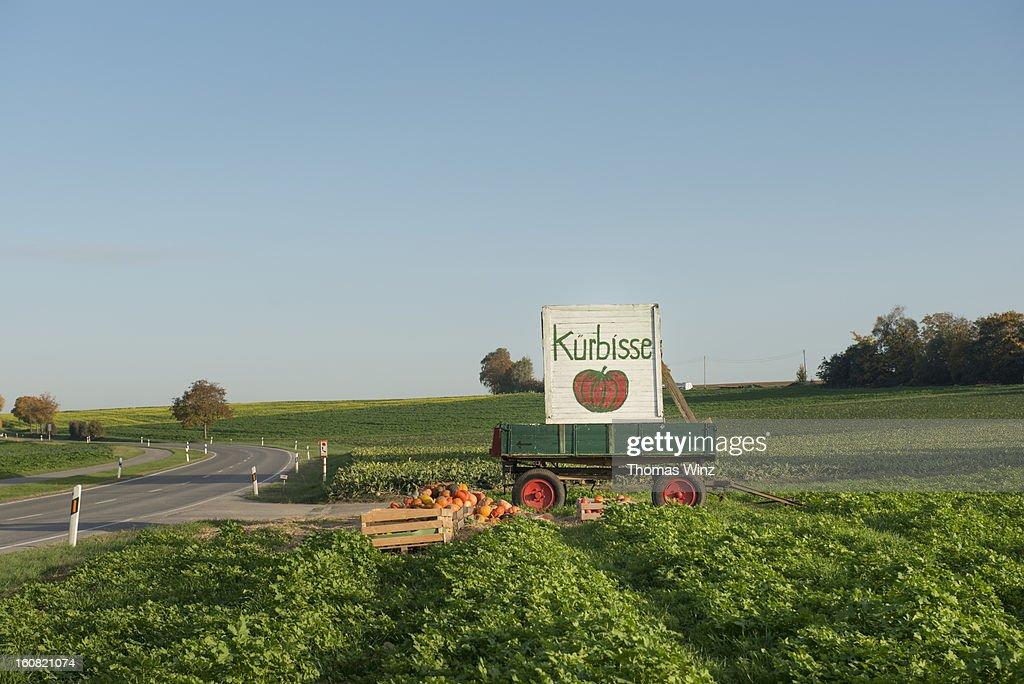 Pumpkins for sale : Stock Photo