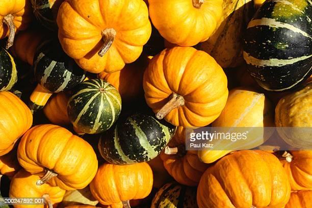 Pumpkins, gourds, (overhead view)