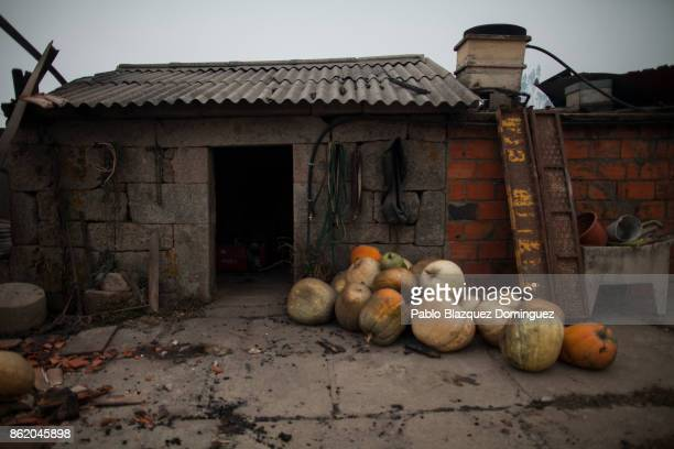 Pumpkins lay on the ground next to burnt houses in the village of Vila Nova near Vouzela on October 16 2017 in Viseu region Portugal At least 30...