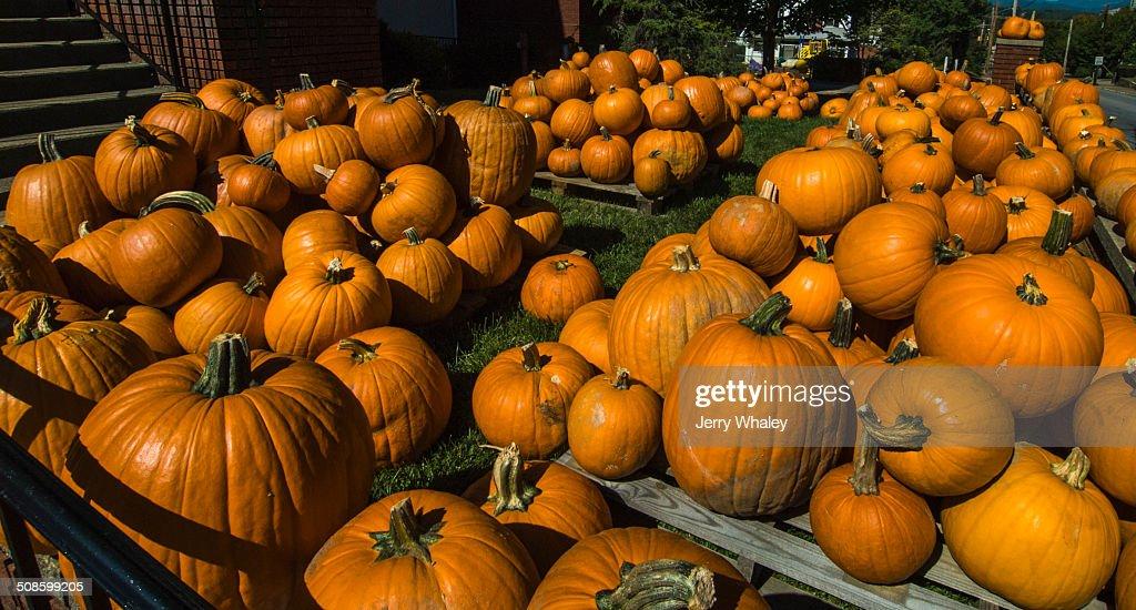Pumpkins, Waynesville : Stock Photo