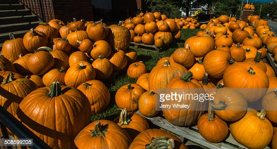 Pumpkins, Waynesville : Foto de stock