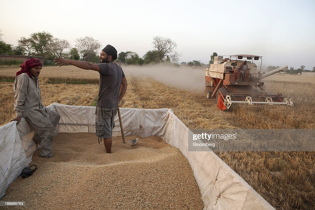 A Punjab Tractors Ltd. Swaraj 8100 combine harvester drives past a wagon of harvested wheat as laborers stand in the district of Jalandhar in Punjab, India, on Monday, April 15, 2013. Wheat harvest in India, the second-biggest grower, may reach a record for a sixth straight year after farmers increased use of high-yielding seeds and winter rains boosted crop prospects, a state-run researcher said. Photographer: Prashanth Vishwanathan/Bloomberg via Getty Images