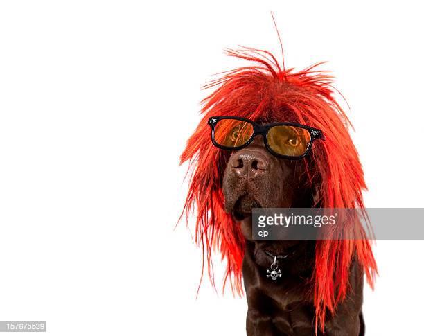 Punk Rock chien