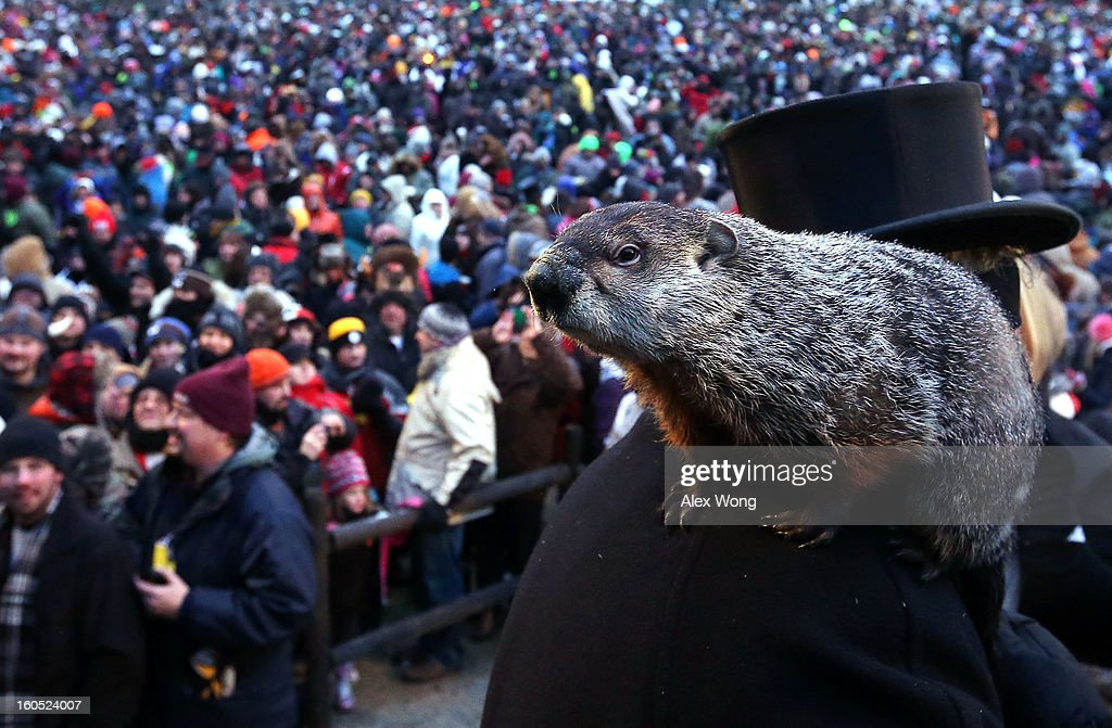 Punxsutawney Phil climbs on the shoulder of groundhog co-handler John Griffiths after Phil didn't see his shadow and predicting an early spring during the 127th Groundhog Day Celebration at Gobbler's Knob on February 2, 2013 in Punxsutawney, Pennsylvania. The Punxsutawney 'Inner Circle' claimed that there were about 35,000 people gathered at the event to watch Phil's annual forecast.
