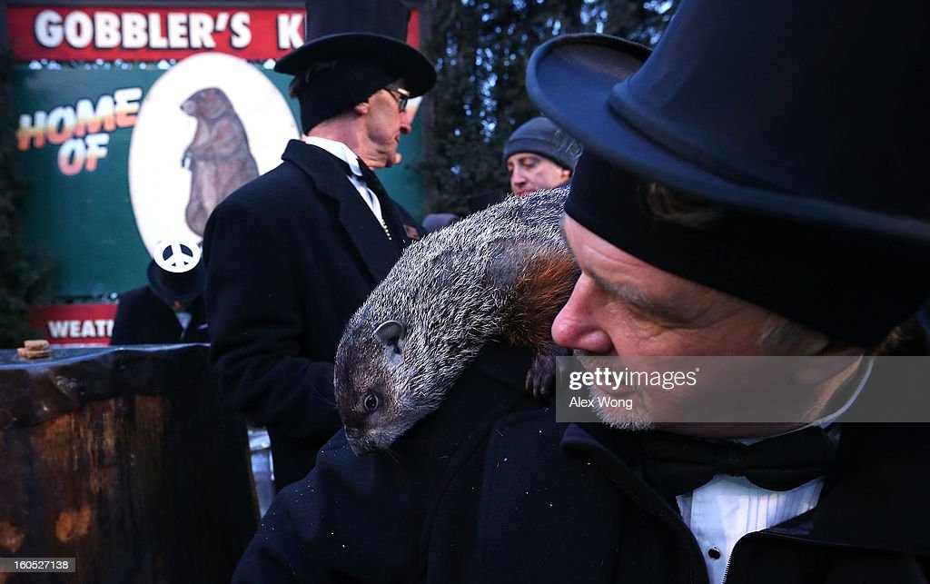 Punxsutawney Phil climbs on the shoulder of groundhog co-handler John Griffiths (R) after Phil did not see his shadow and predicting an early spring during the 127th Groundhog Day Celebration at Gobbler's Knob on February 2, 2013 in Punxsutawney, Pennsylvania. The Punxsutawney 'Inner Circle' claimed that there were about 35,000 people gathered at the event to watch Phil's annual forecast.
