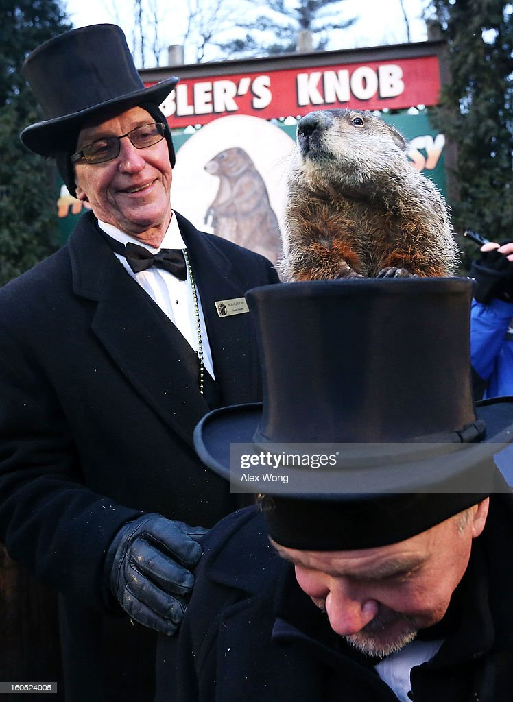 Punxsutawney Phil climbs on the top hat of groundhog co-handler John Griffiths (R) as co-handler Ron Ploucha (L) looks on after Phil didn't see his shadow and predicting an early spring during the 127th Groundhog Day Celebration at Gobbler's Knob on February 2, 2013 in Punxsutawney, Pennsylvania. The Punxsutawney 'Inner Circle' claimed that there were about 35,000 people gathered at the event to watch Phil's annual forecast.