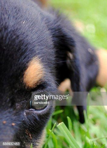 pup close up : Stock Photo